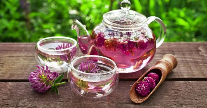 Trifoiul rosu – Cel mai bun remediu natural pentru menopauza
